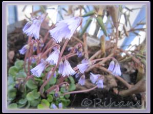 En till blå blomma