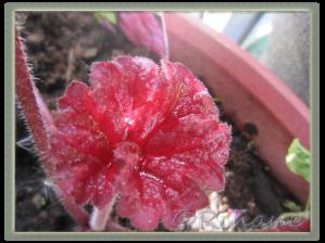 blött blad