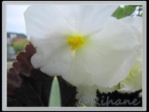 Enkel blomma