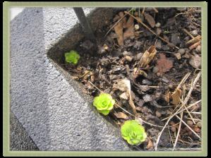 Vilken är växten?